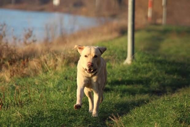 Ohne Leine auf der Neckarwiese? Kein Problem! | Foto: Martina Stöbe