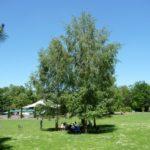 Freier Eintritt zum Stadtteilfest im Herzogenriedpark