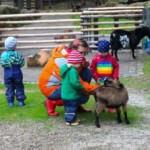 Tierspaziergänge – mit Esel und Pony über die Wiese