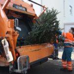 Wann holt die Abfallwirtschaft die Weihnachtsbäume ab?