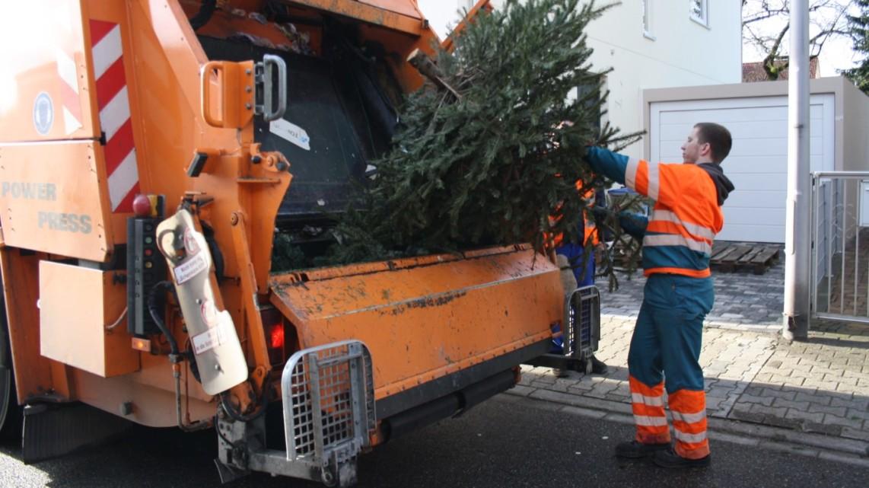 img 5433 e1610104679625 1142x641 - Weihnachtsbäume werden vom 7. bis 15. Januar 2021 abgeholt