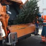 Weihnachtsbäume werden vom 7. bis 15. Januar 2021 abgeholt