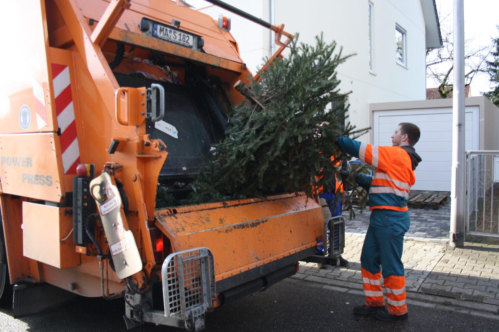 Wann der Weihnachtsbaum genau abgeholt wird, verrät der Abfallkalender | Foto: Stadt Mannheim