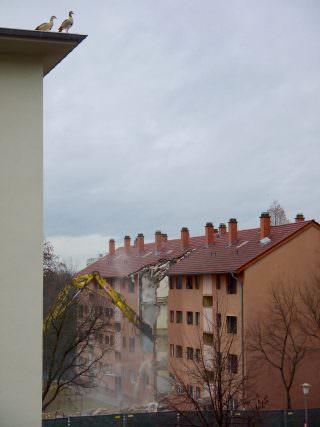 Die beiden Gänse auf dem Dach waren regelmäßige Gäste auf dem Gelände, das inzwischen ein Trümmerfeld ist | Foto: M. Schülke