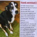 Mutmaßlicher Hundedieb ermittelt