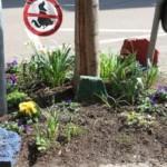 Frühlingsprogramm bei den Quartierpaten in Neckarstadt-West