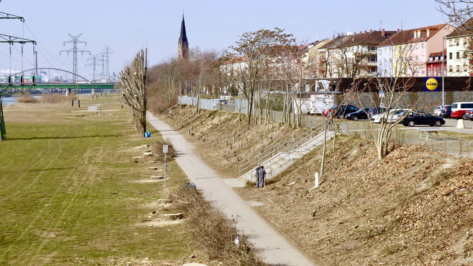 Im Februar 2018 wurden zunächst 24 von 63 Bäumen gefällt, nun folgen weitere 25 Pappeln (Archivbild) | Foto: M. Schülke