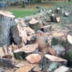 Umgefallene und beschädigte Bäume nach Sturm