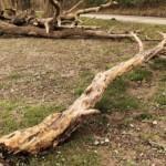 Stadt ruft zur Hilfe beim Bewässern von Bäumen auf – stadtweites Grillverbot!