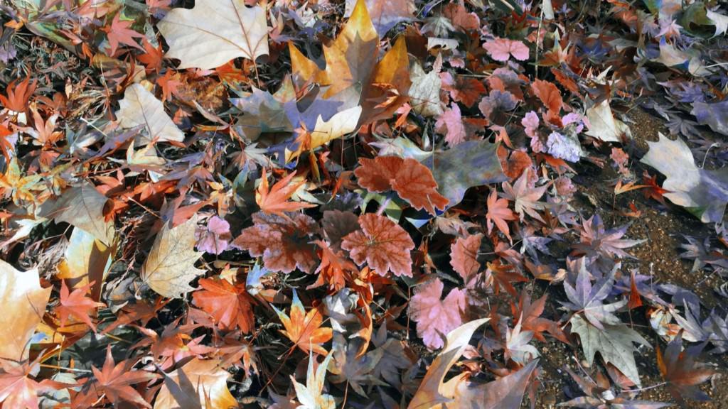 Herbstlaub (Symbolbild) | Foto: M. Schülke