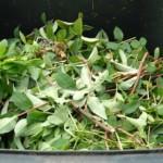 Aktuelle Hinweise zu Grünschnitt, Sperrmüll und den Recyclinghöfen
