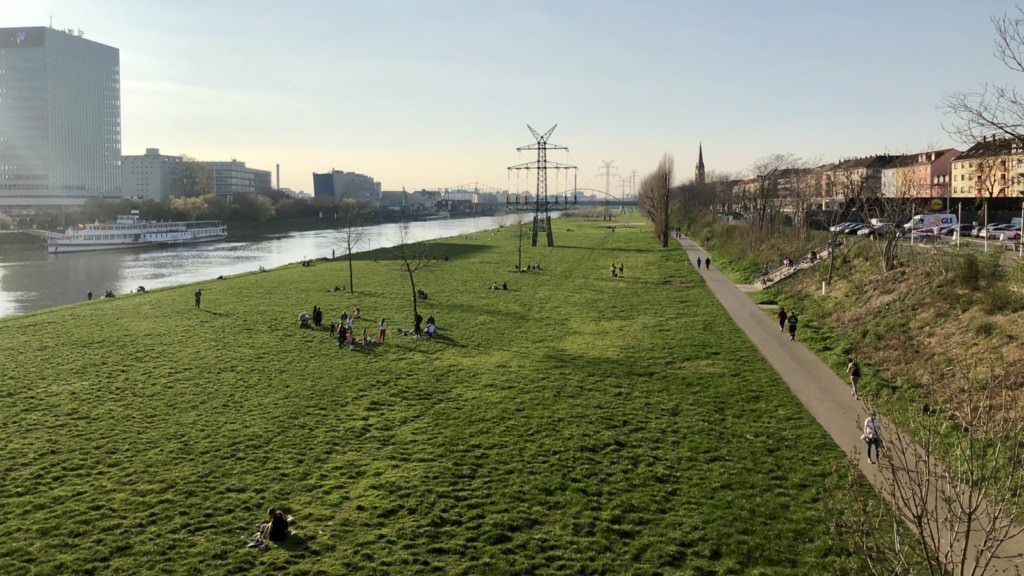 Frühlings Erwachen als ob nichts wäre auf der Neckarwiese | Foto: M. Schülke