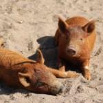 Herzogenriedpark: Tiere entspannt im Lockdown