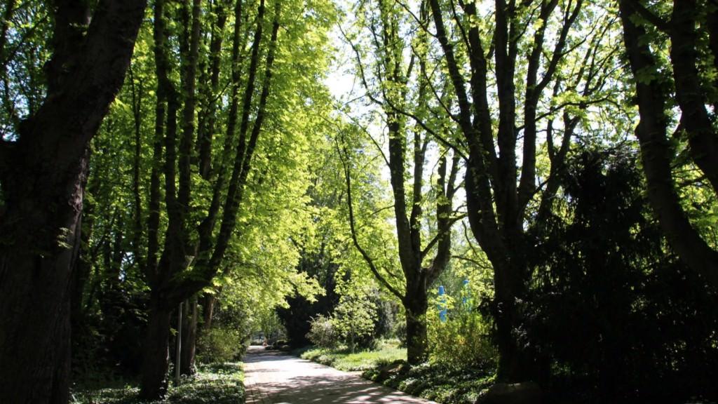 Verlassene Wege im Herzogenriedpark | Foto: Elmar Herding