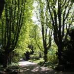 Stadtparks wegen Sturmwarnungen heute geschlossen